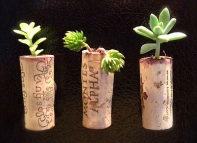 Горшки для живых растений